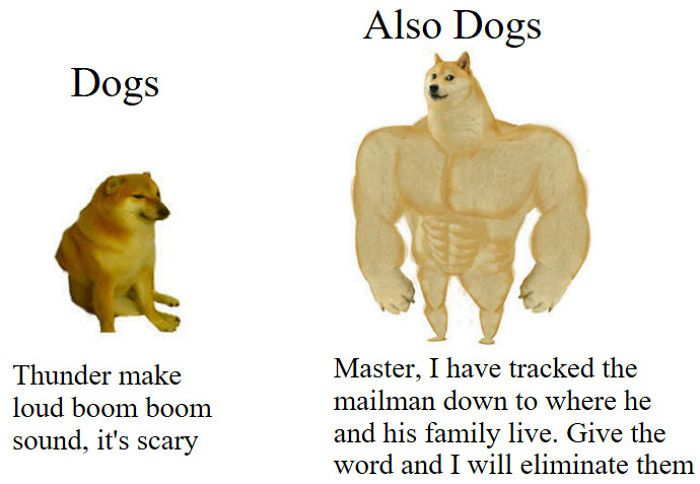 Then Now Dog Meme Stupid Memes Stupid Funny Memes Funny Relatable Memes