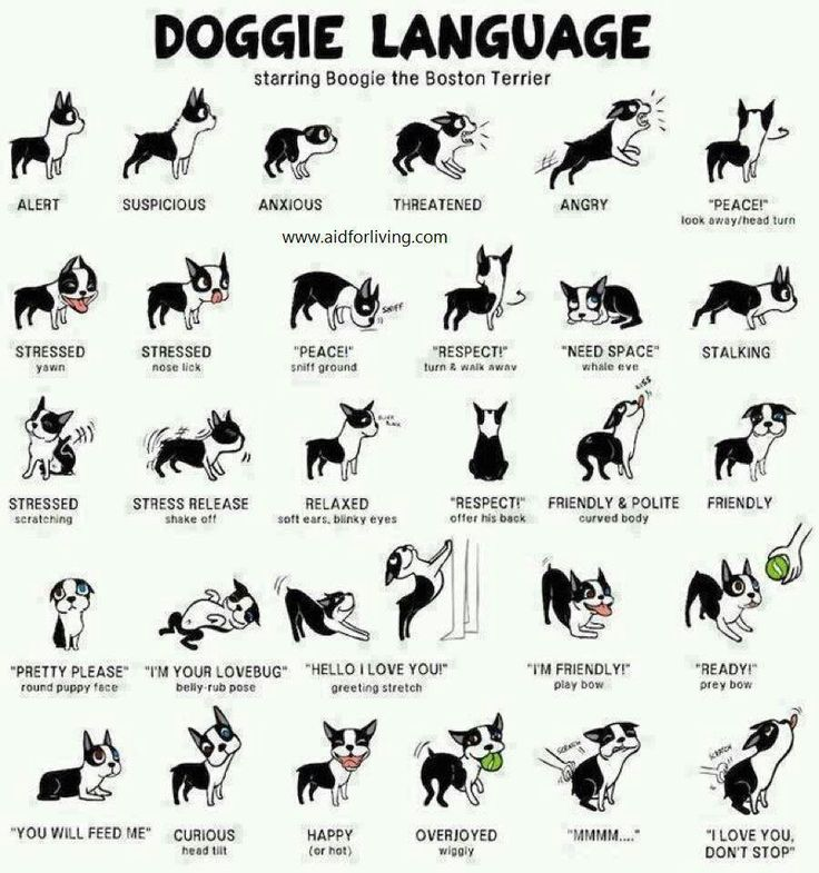 Understanding dog body language is part of my job as a pet photographer. This is an excellent chart of dog language.