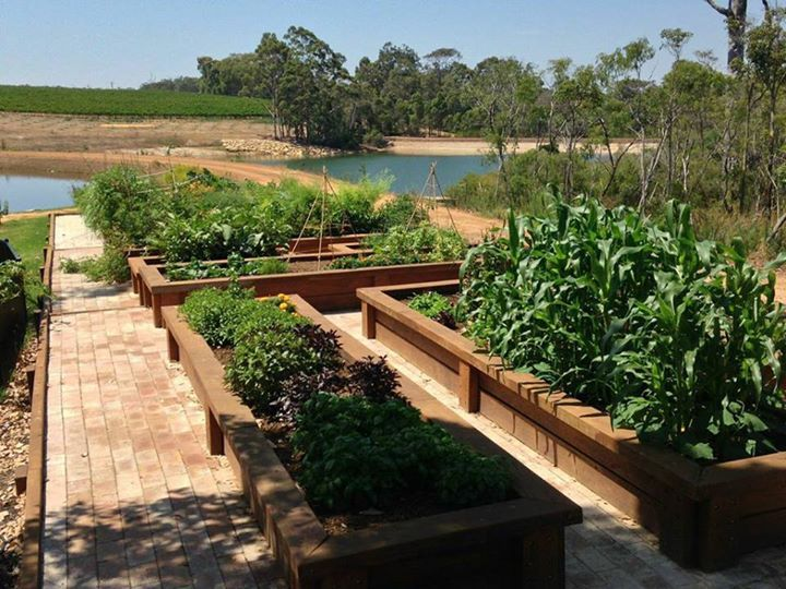 The Aravina kitchen garden is filling up with lush, delicious fruit and veggies!