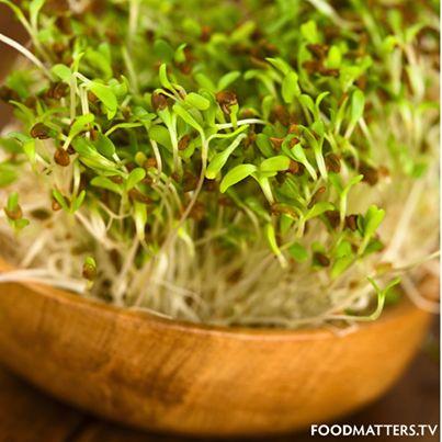 La alfalfa es rica en enzimas que ayudan la digestión y aumentan la salud celular, contiene todas las vitaminas solubles: A, D, E y K.