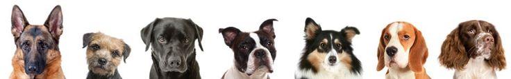 Rules for Choosing a Dog | Dog Breed Health