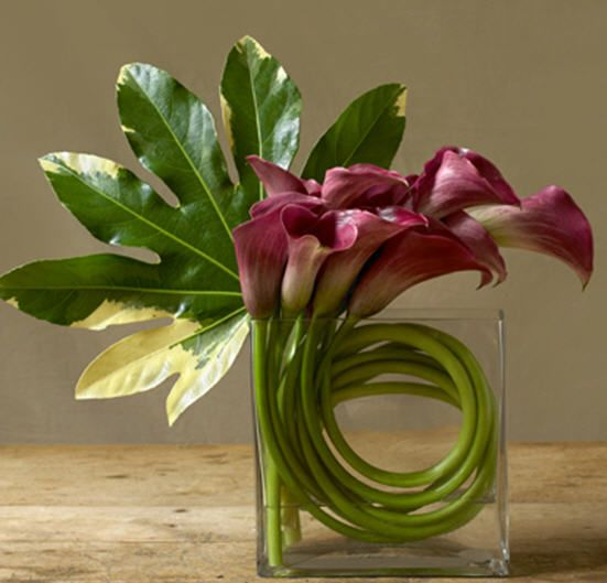 Callas and Aralia leaf