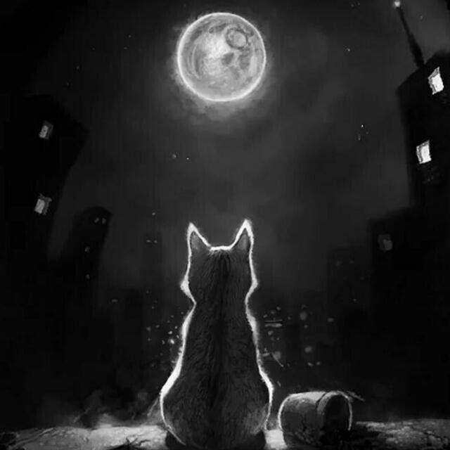 purr fect cat shelter
