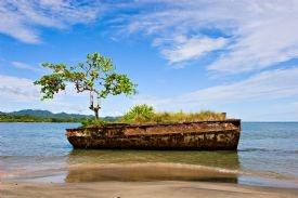 Old vessel with tree in Puerto Viejo-Puerto Viejo de Talamanca, Limon