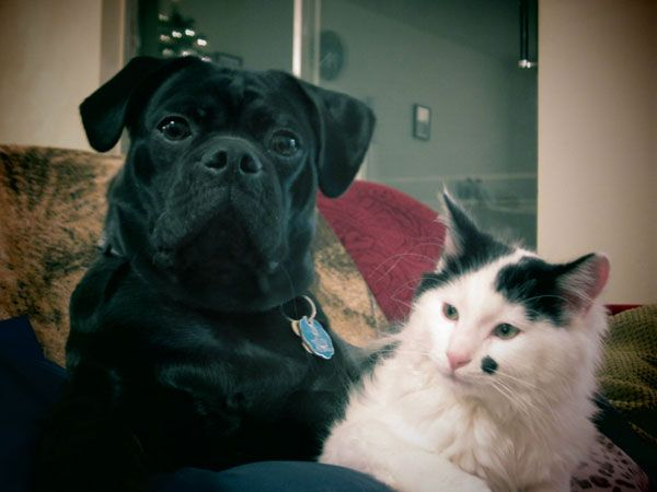 Best friends and brothers. #pets #cat #dog