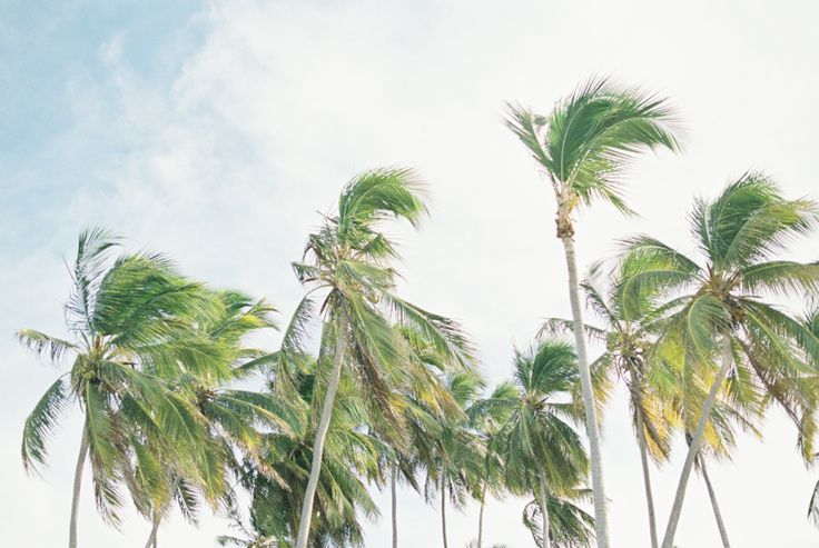 Palm tree tops in the Dominican Republic. Photography by Heidi Lau.