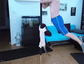 A pole dancing kitty….. Whatever next !!