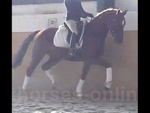 www.sporthorses-online.com 2011 Dressage gelding 16.1 hh price range I