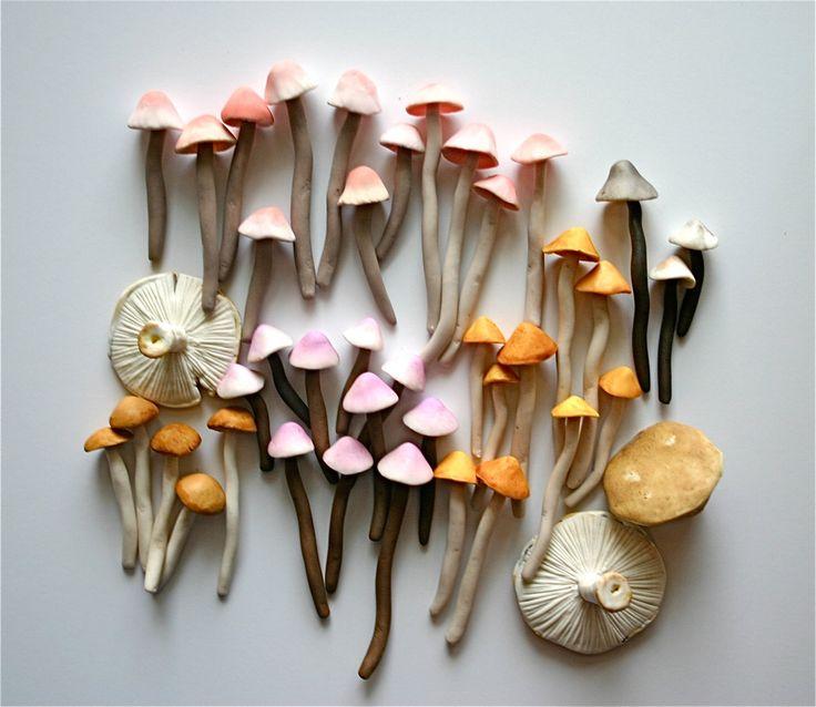 beautiful and colorful mushrooms //