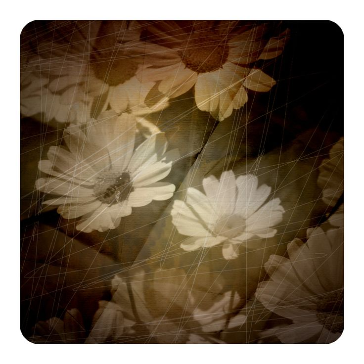 digital old photo look daisies by Brianna Buza
