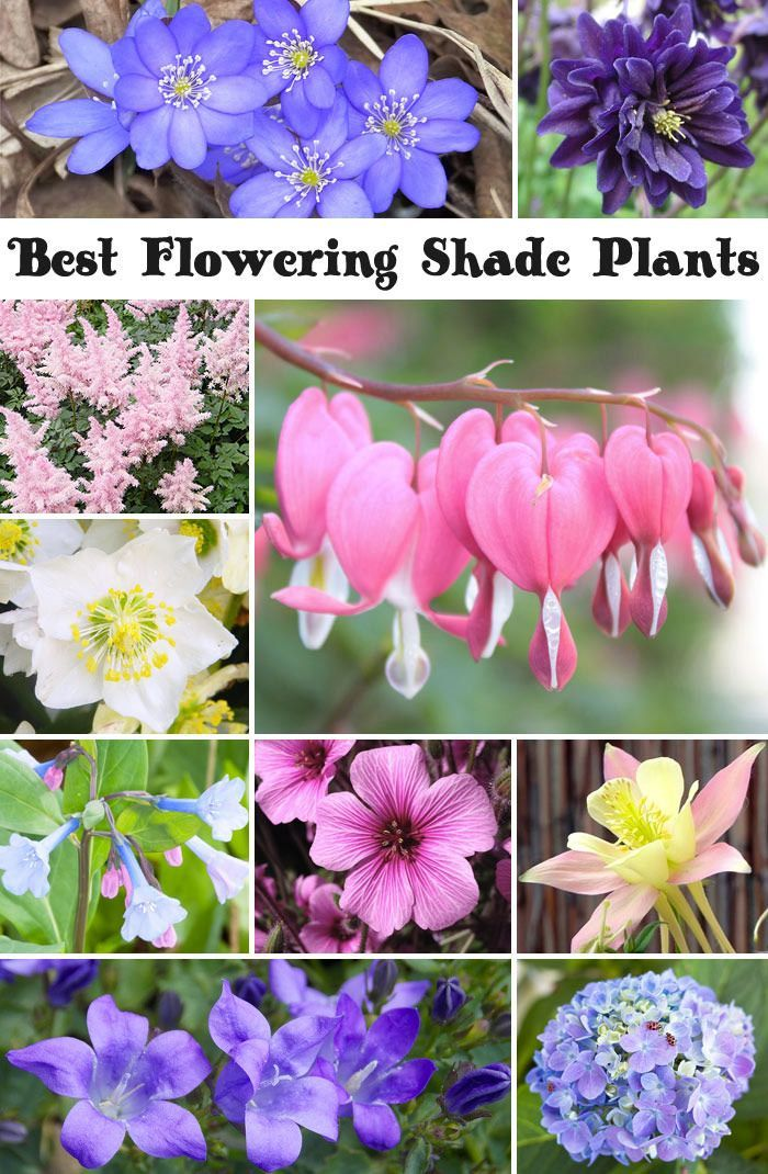 10 best flowering shade plants - Flower Garden Ideas Partial Sun