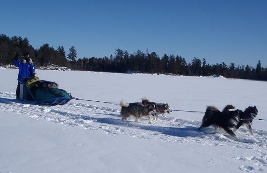 How cool is this? Dog sledding in Minnesota (Courtesy of The Northwest Passage/Polar Explorers staff)