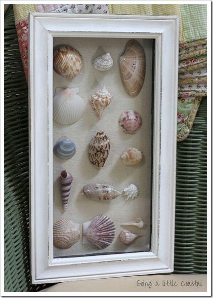 Florida seashell shadowbox idea