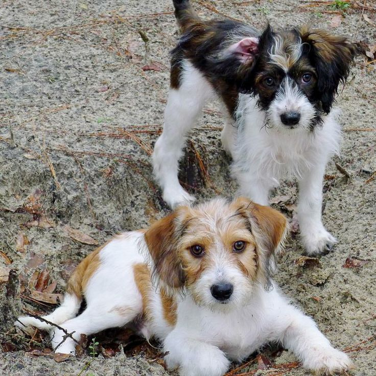 Craigslist Ocala Dogs For Sale