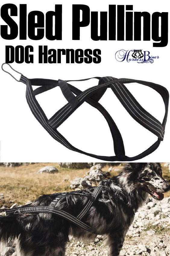 Weight Pulling Dog Harness No Two Dogs Are The Same Don T Guess