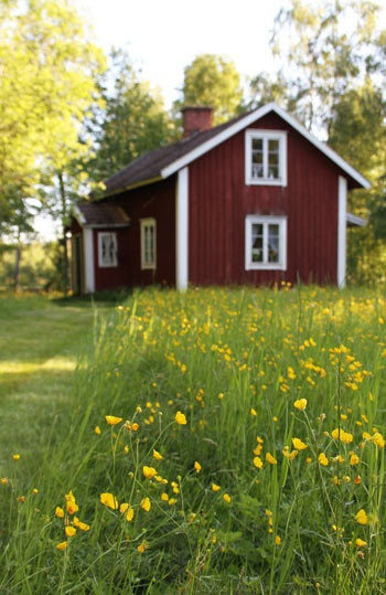 Red cottage and buttercups in Småland, Sweden