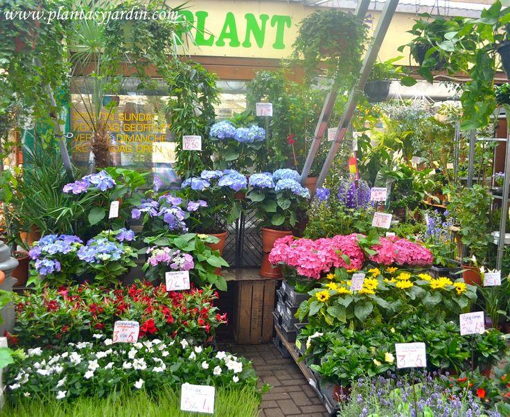 111 best images about plantas jard n on pinterest for Matas de jardin