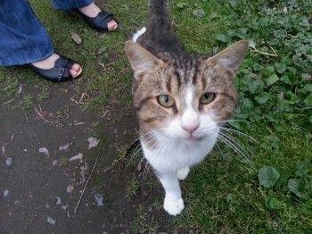 C'est l'histoire d'un pauvre chat livré à lui même dans un parc et souffrant d'une gale des oreilles et d'une cystite. Il doit être soigné.