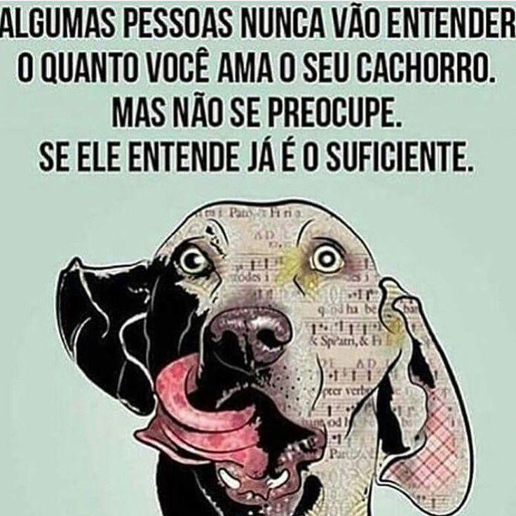 AMO MTOOO!!!❤❤ #petmeupet #cachorro #cachorroterapia #cachorroetudodebom #caopanheiro #maedecachorro #paidecachorro #filhode4patas #luludapomerania #viralata #schnauzer #labrador #pug #maltes #bodercollie #bulldog #yorkshire