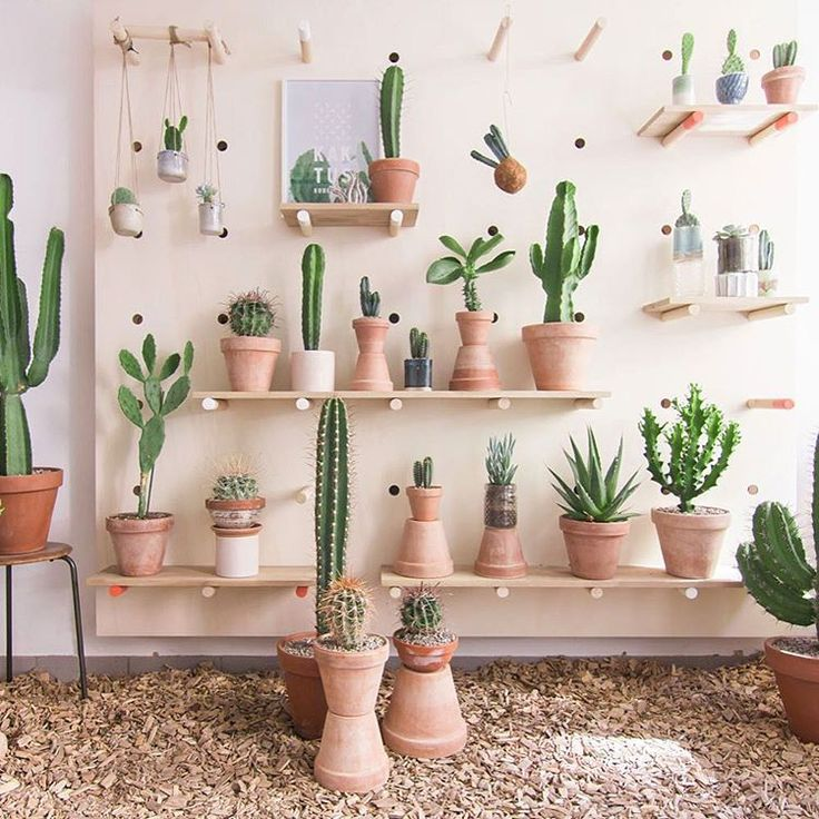 """Succulent Sundays #plantlife Kaktus København opens prickly new concept store in #Copenhagen"""