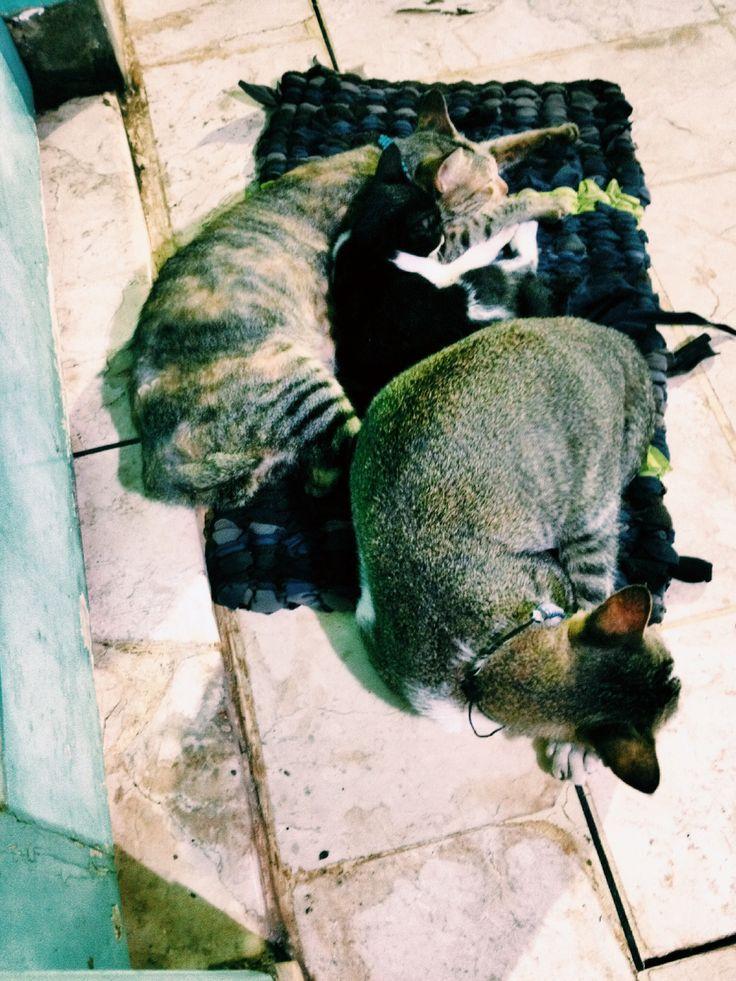 Johnny cats