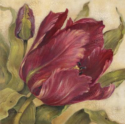 Scarlet Tulip  by Kathryn White