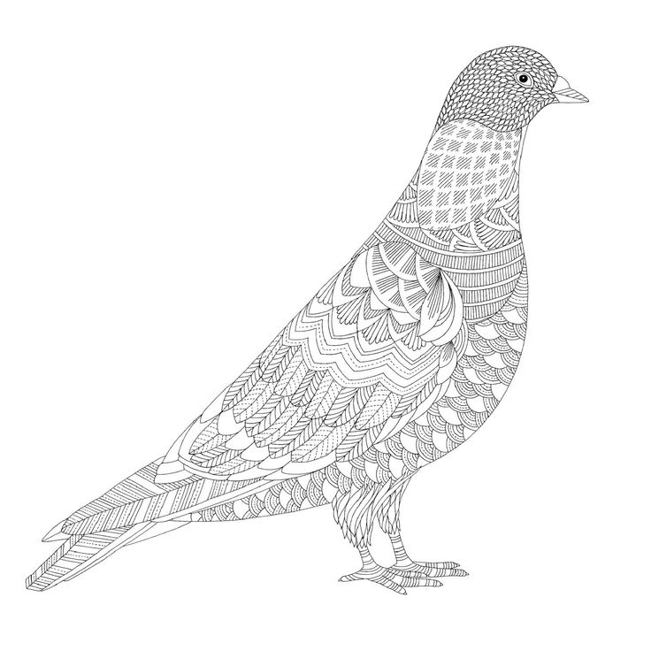 19 best coloring pages birds images on pinterest coloring books bird coloring pages and. Black Bedroom Furniture Sets. Home Design Ideas