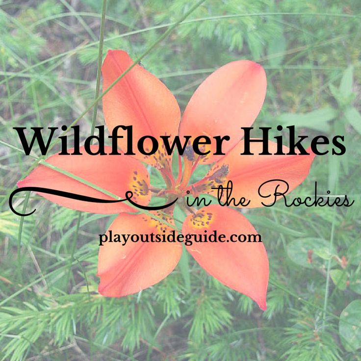 Play Outside Guide: Wildflower Hikes in the Canadian Rockies