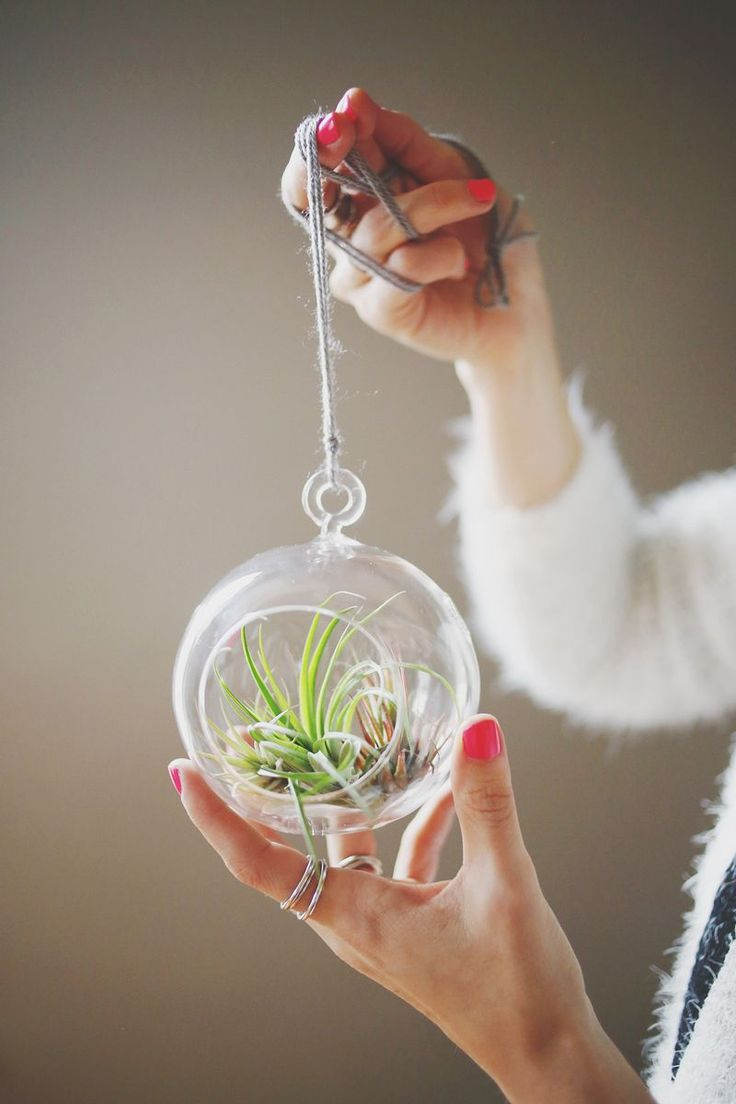 How to Care for Air Plants abeautifulmess.com: Plants Abeautifulmess Com, Hanging Plants, Hanging Air Plants Diy, Terrarium Ideas Water Plants, Airplant Terrarium, Beautiful Mess, Air Plants Care, Airplant Display, Diy Air Plants Terrarium