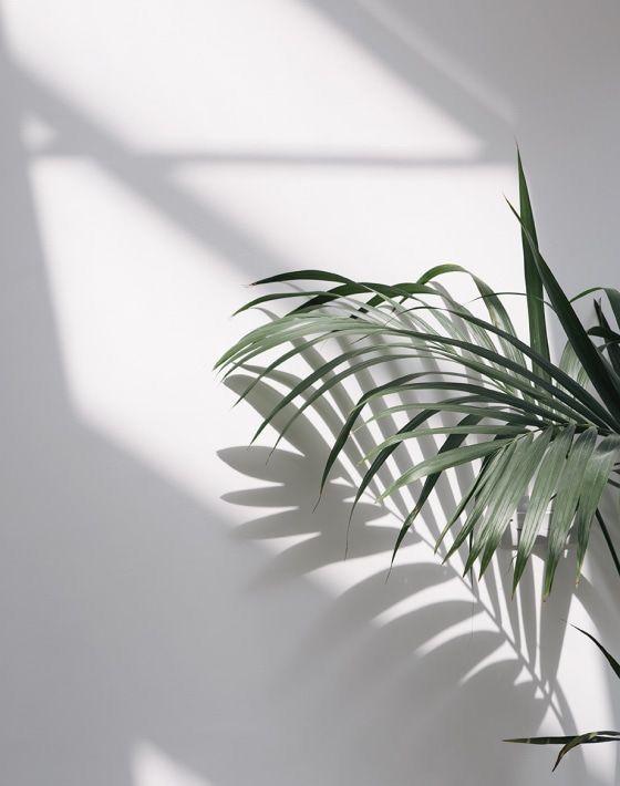 Tropical Aesthetic | Boho Vibes in 2020 | Minimalist ...