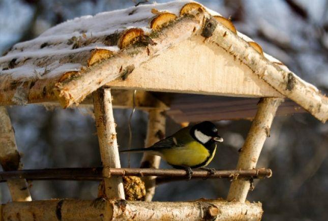 кормушка для птиц своими руками фото: 42 тыс изображений найдено в Яндекс.Картинках