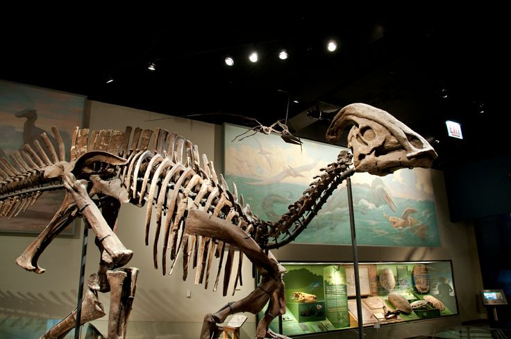 178 Best Dinosaurs Fossils Images On Pinterest
