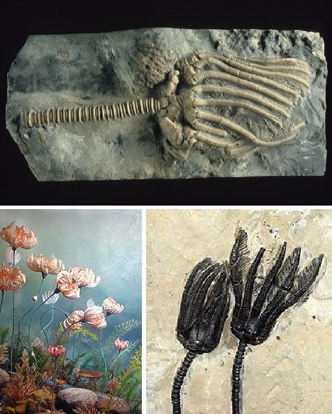 relationship between fossils and living animals
