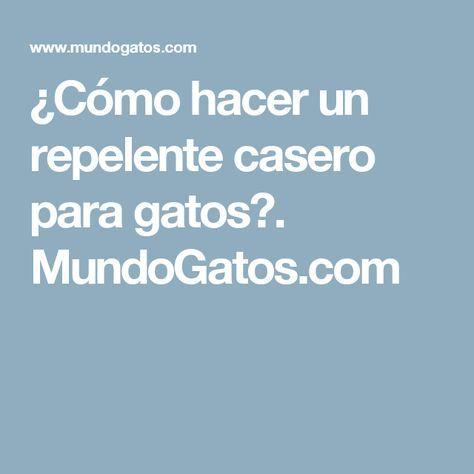 ¿Cómo hacer un repelente casero para gatos?. MundoGatos.com