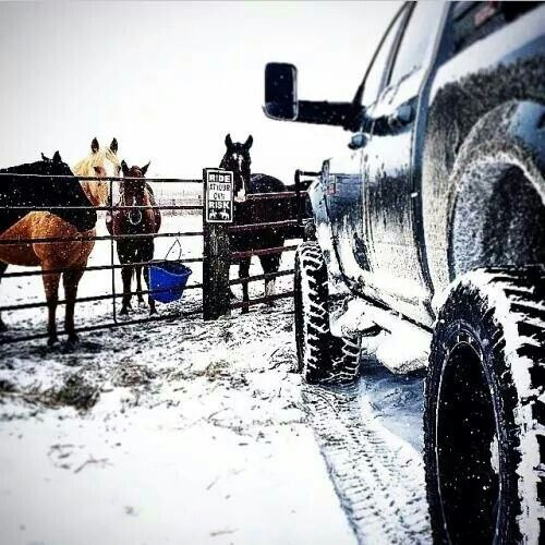 My two loves ... A truck and horses :)