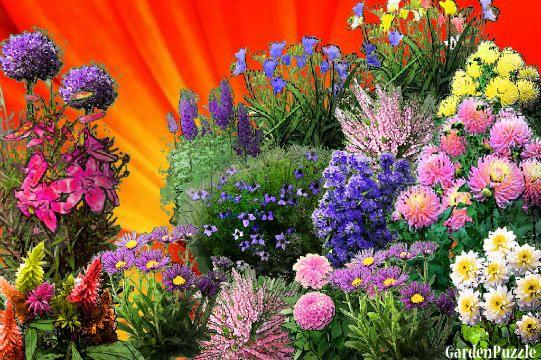 more flowers - GardenPuzzle - online garden planning tool