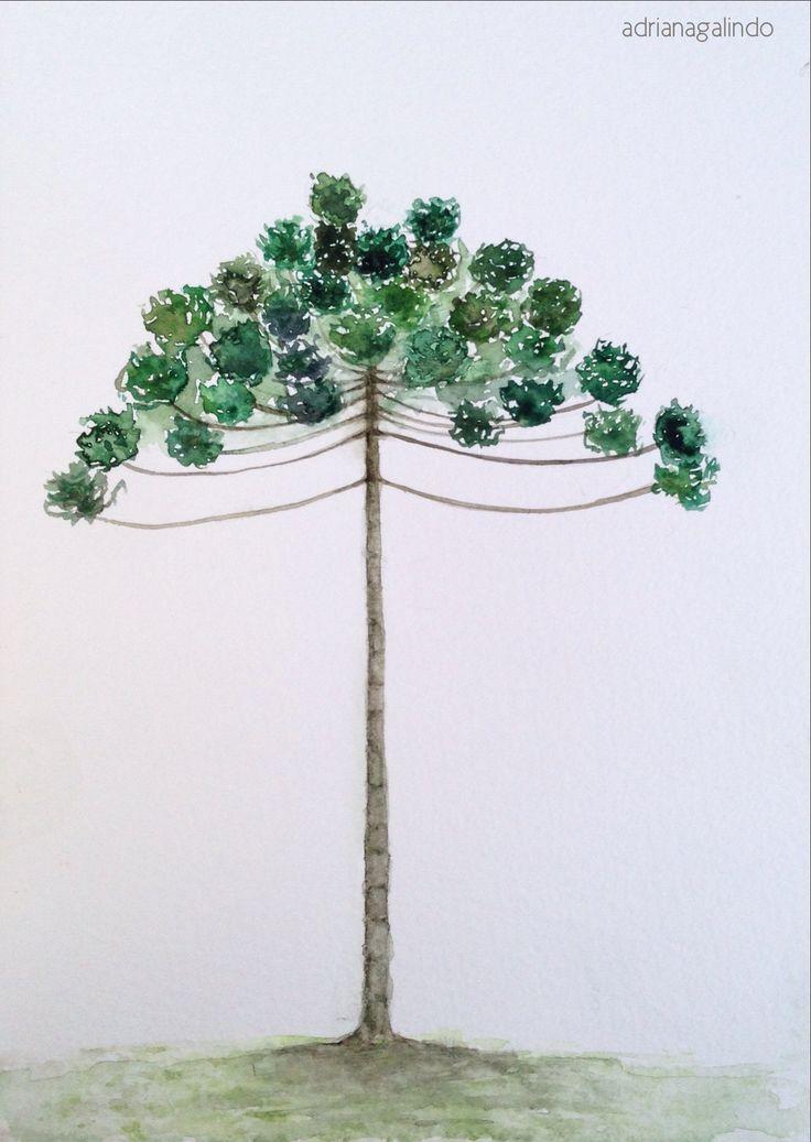 Araucaria, árvore 6/ Brazilian Araucaria, tree 6,  aquarela / watercolor 21 x 15 cm  - 40 trees project   drigalindo1@gmail.com Adriana Galindo
