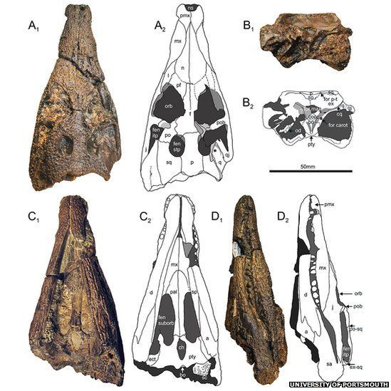 New crocodile found. A figure from the journal paper showing pictures and diagrams of the skull