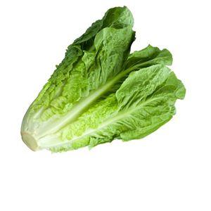 Lettuce | Salad Patta