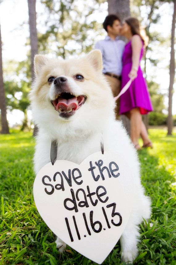 Such a sweet way to include your pooch in your engagement photos