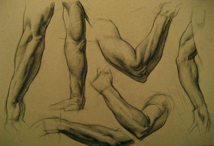 Анатомический рисунок – 498 photos | VK
