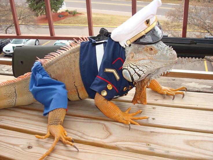 iguana in a costume contest | reptiles | Pinterest ...