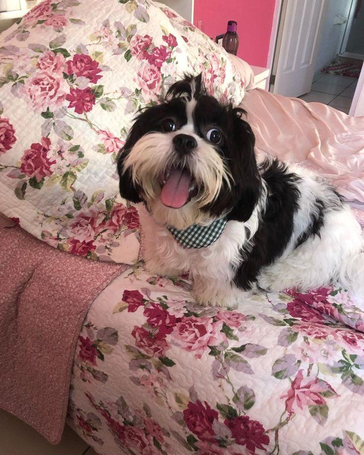 #dog #dogs #dogsof #puppies #cutedogs #dogsofinsta Te amo mi amo