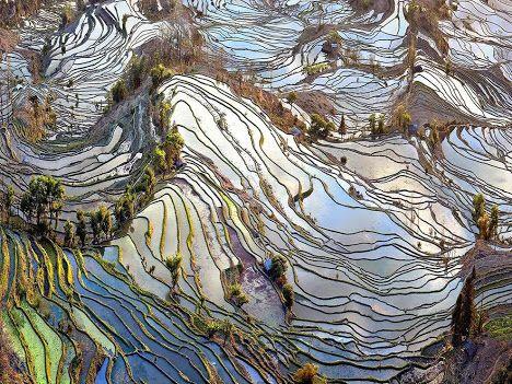 """Velhos Campos  Fotografia de John Qu, National Geographic   """"Esta terra simboliza o ritmo das pessoas, uma vez que foi formada através de gerações de agricultores moldando-a com a irrigação"""", diz John Qu. """"É um fenômeno de rara beleza feita pelo homem disfarçado como uma ocorrência natural."""""""