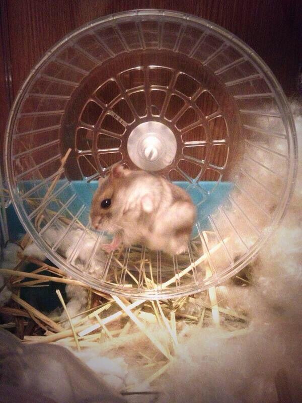 ブレイクダンスするハムスター Cute Animals Hamster Animals
