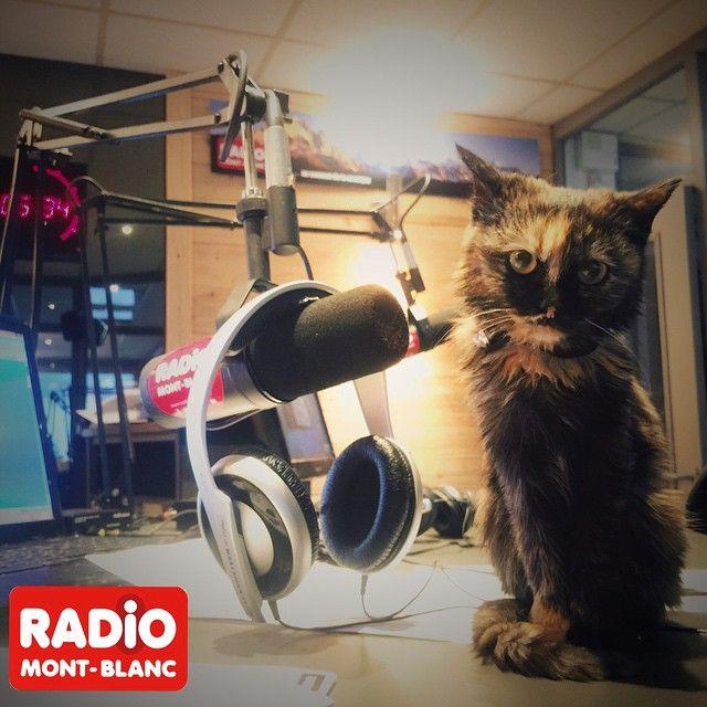 Une nouvelle #animatrice #radio sur #radiomontblanc ! #Jacqueline le chat de la radio!!! #radio #live #direct #30millionsdamis #chatte #cats #montblanc #montblancmorning #morning #hautesavoie #74 #kitten #kittycat