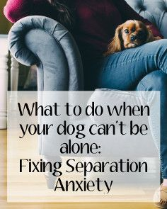 Petlosopher.com - Many dogs completely lose their marbles when the family leaves the house. This behavior, called separation anxiety, can be cured with careful training and care. This article outlines the basic steps.