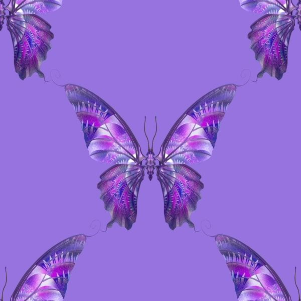 Purple Butterfly Wallpaper | Purple Wallpapers and Purple Backgrounds 62 of 114