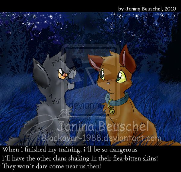 Warriors Into The Wild Online: 329 Best Images About Warrior Cats On Pinterest