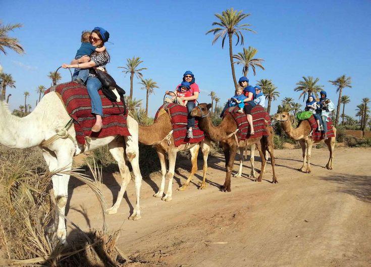 Balade a Dos de Dromadaire dans la Palmeraie de Marrakech La balade à dos de Dromadaire Marrakech est une occasion